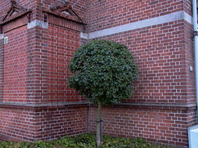 tree-mini.jpg